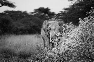 elephant1-site.jpg