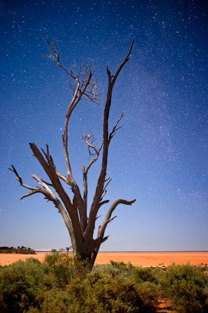 Treeballard.jpg